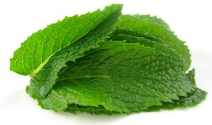 Health-Benefits-of-Mint