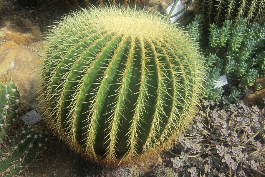 cactus-dreams-02